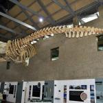 1 Museo do mar Galicia Vigo  (95)