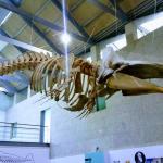 1 Museo do mar Galicia Vigo  (2)